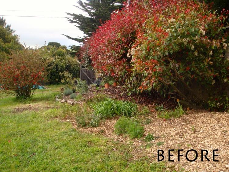 Photinia hedge before garden renovation