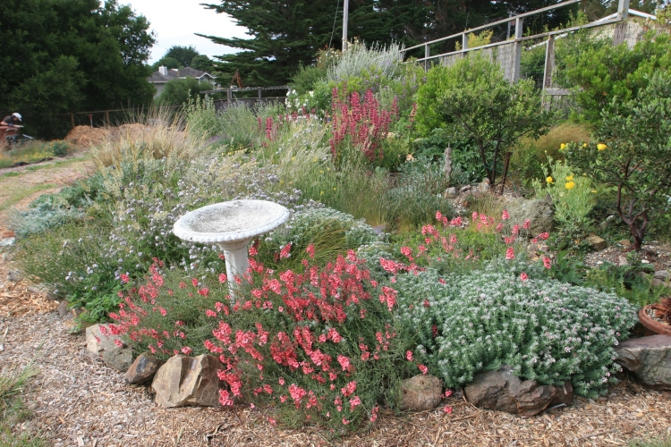 Marin county garden design