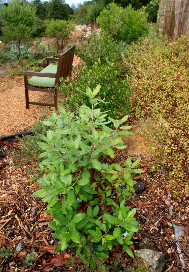 Marin county native garden design