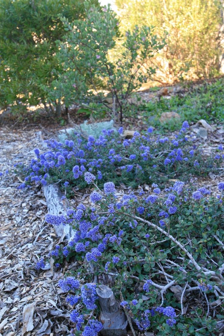 Marin county native garden designer
