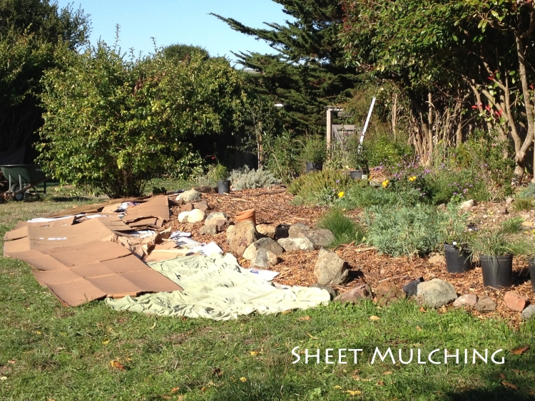 Sheet mulching - marin county garden design