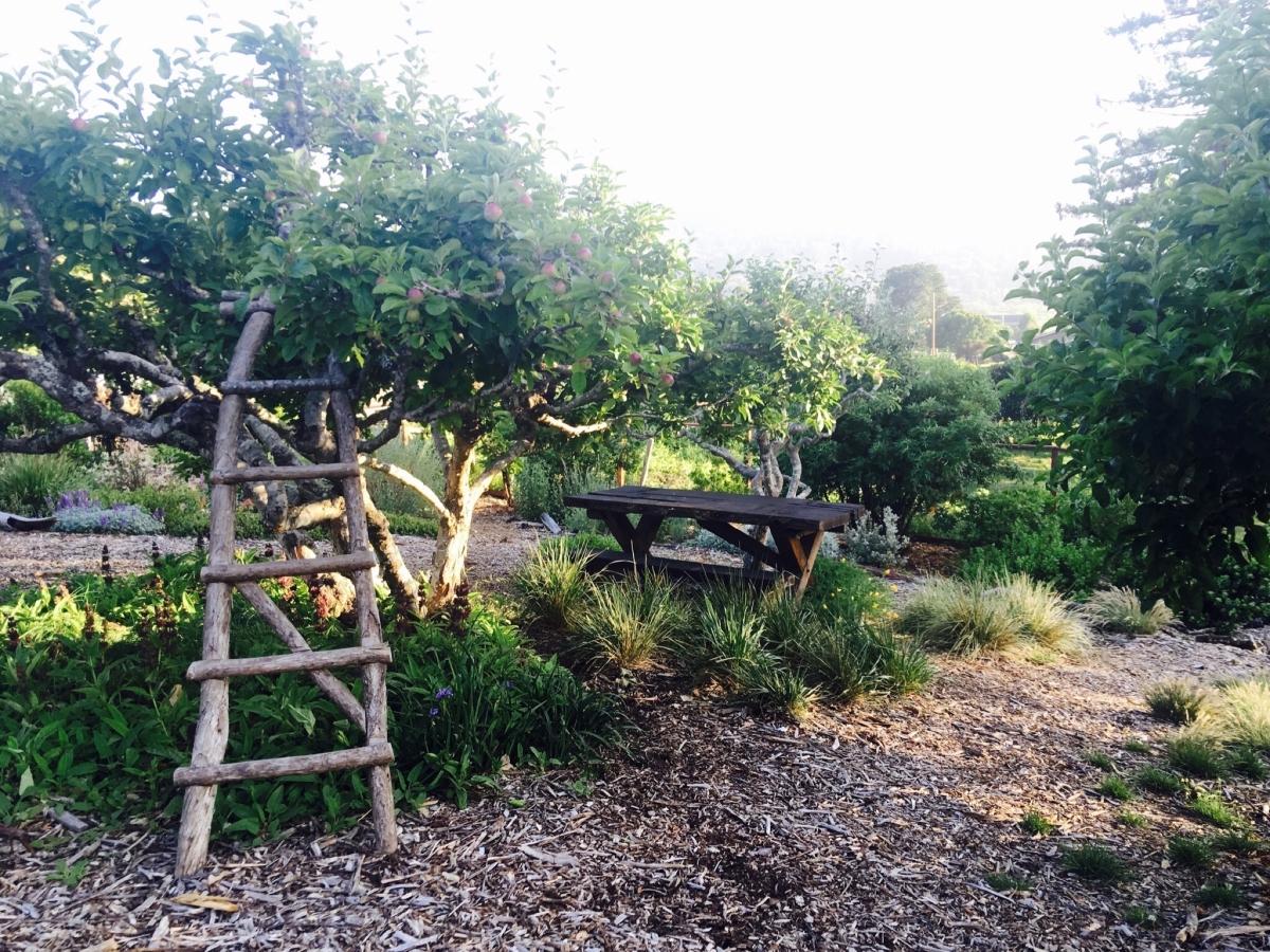 Marin county garden design