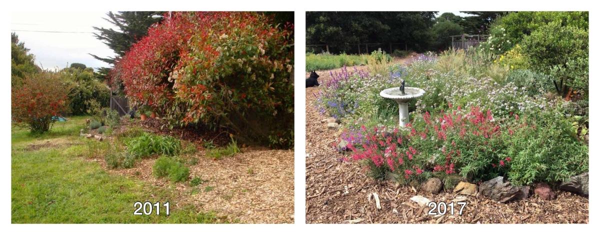 Marin county garden design by Suzi Katz