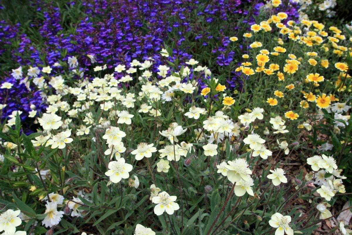 Marin county native garden design for creating habitat