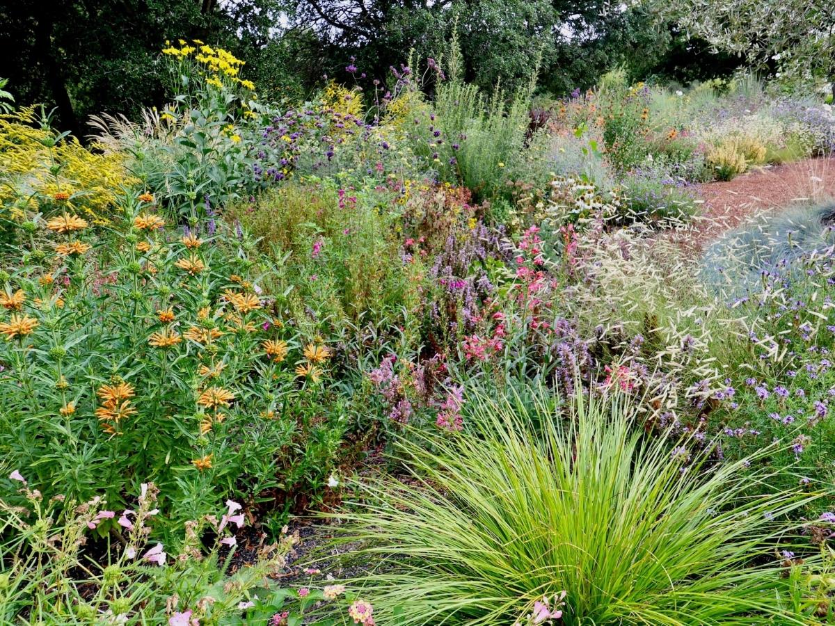 Novato habitat garden design