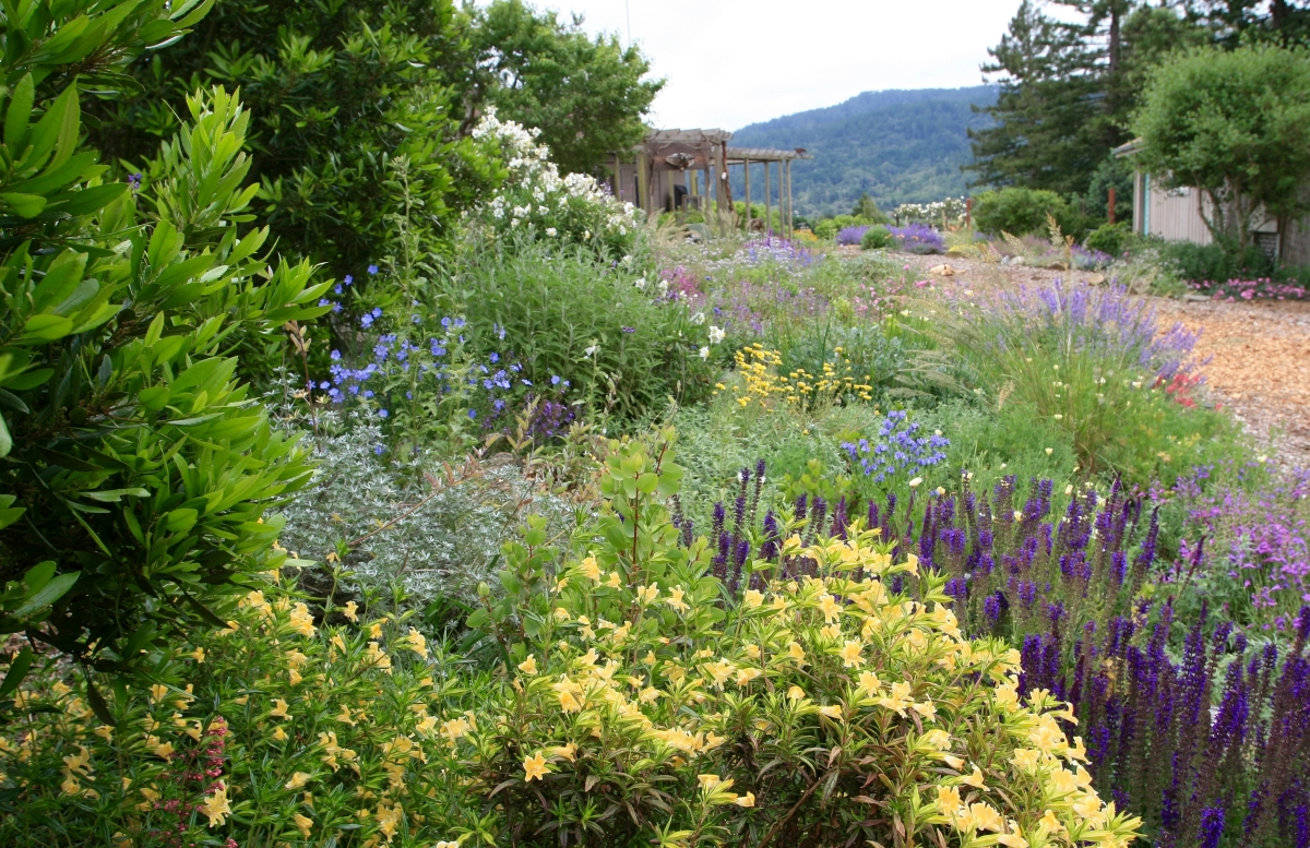Native habitat garden by Suzi Katz Garden Design
