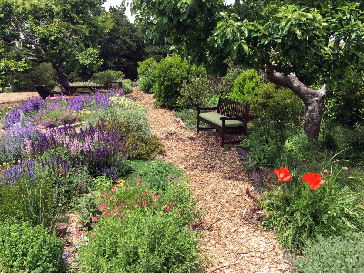 Marin county garden design by Suzi Katz